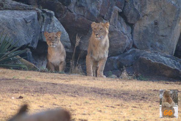 Besuch Zoo Berlin und Tierpark Friedrichsfelde 21.02.2021
