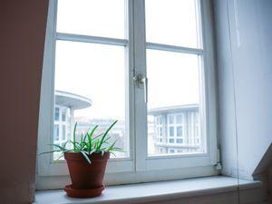 """Blick aus dem """"Küchen-Wohnzimmer-Fenster"""""""