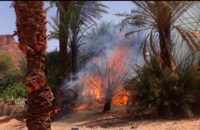 Suite à l'incendie de la palmeraie de Gouro, l'ONG AHA demande une intervention d'urgence pour secourir l'écosystème et les populations.