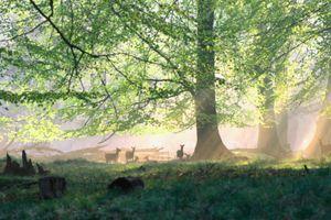 Une forêt qui se réveille, ça donne ça : une vidéo sublime, hypnotique et captivante !