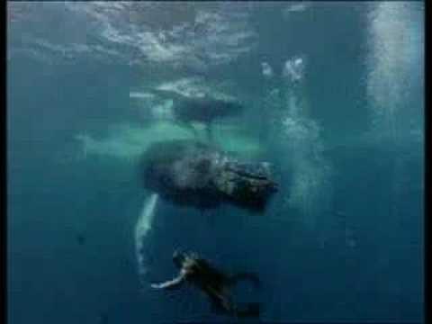 Décès du commandant Cousteau 1997 (vidéo)
