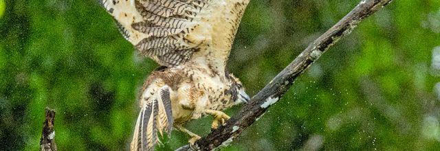 Le mois de la Biodiversité présenté par Mathieu Vidard, en septembre sur Ushuaïa TV !