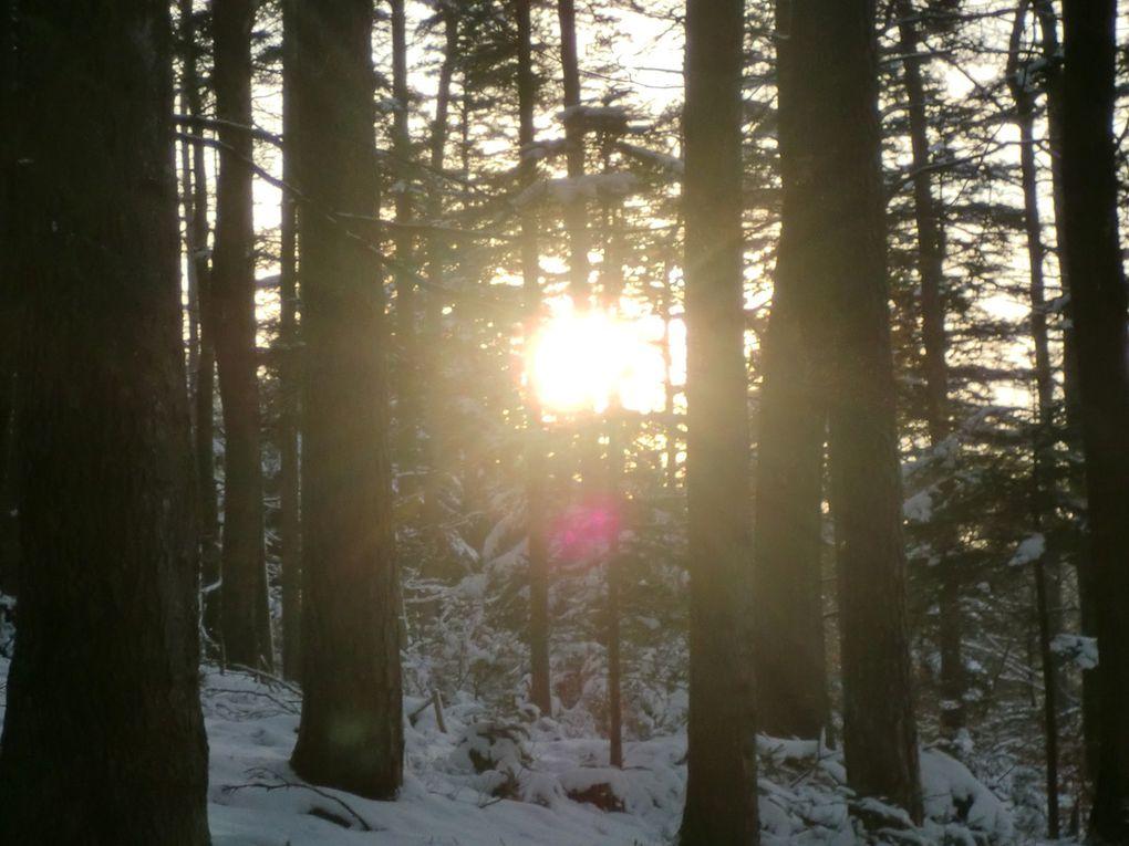 Une tête sculptée dans le tronc d'un pin, nous contemple au sommet du Geisfels. Le soleil couchant sublime encore d'avantage le rocher du Dabo.