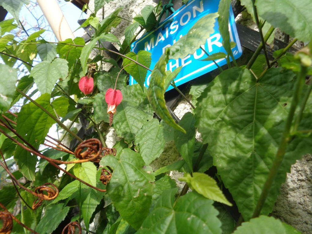 Mon jardin Le Clos fleuri en janvier .....