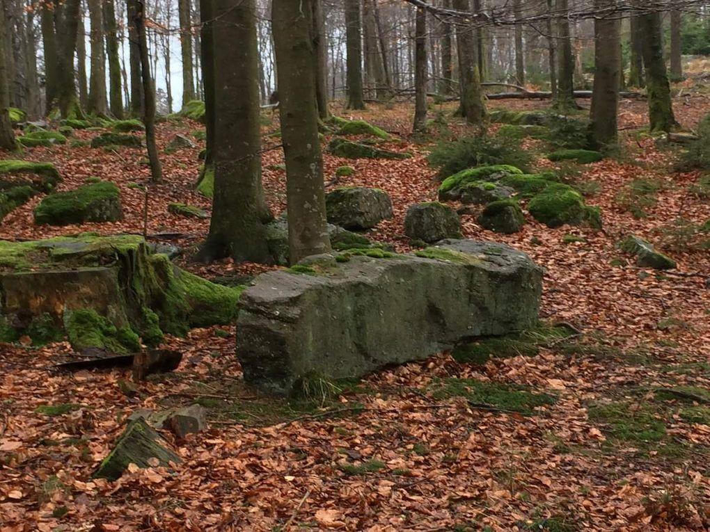 La présence de ces blocs de grès et leur disposition ne me semble pas naturelle. Le site était-il fréquenté jadis par quelques peuplades celtes?