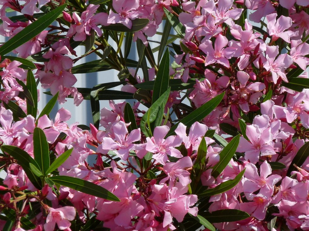 Fleurs 105