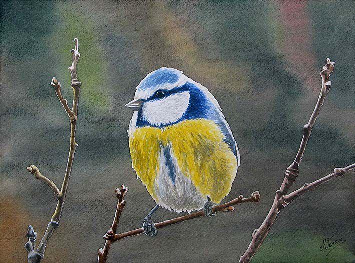 Echantillon d'aquarelles d'oiseaux très colorés.