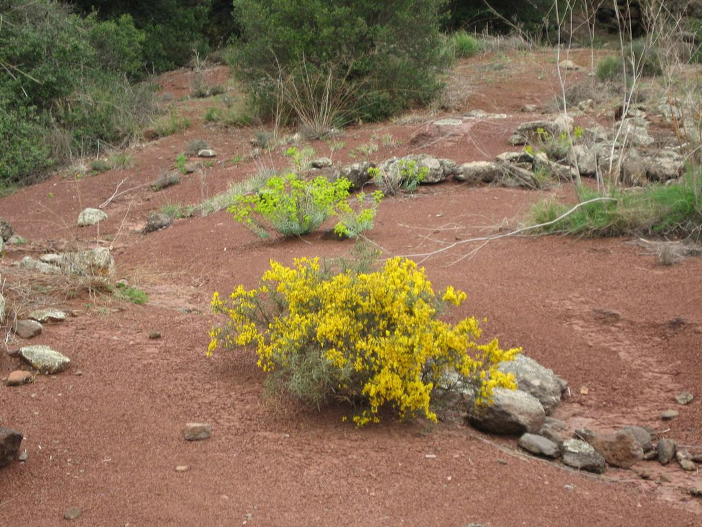 Sortie de 4 jours du 28 avril au 1 Mai 2012 au Salagou.