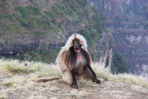 Balade dans le parc national des Simien Mountains pour boucler la boucle