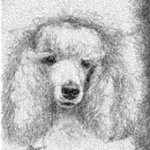 Poodle photo stitch free embroidery design 2