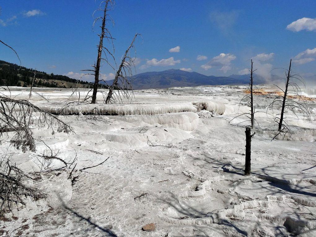 En 10 ans, nous avons pu constater la transformation des terrasses supérieures de Mammoth Hot Springs qui ont perdu leurs couleurs pour se calcifier en une teinte grisâtre... dommage !