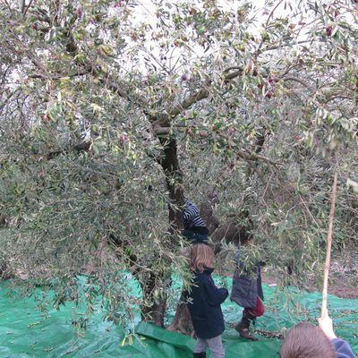 Le vrai goût de l'huile d'olive
