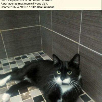Chat perdu sur Arreux, merci de votre aide