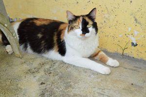 LITCHI - chaton femelle tricolore - adoptée et heureuse !