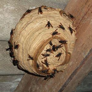 LE BLOG de la désinsectisation et des insectes