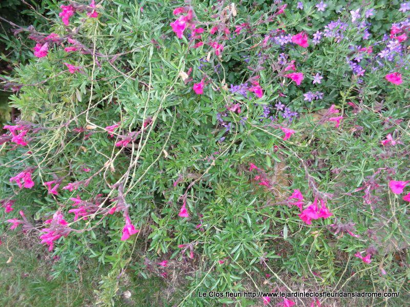 Le Clos fleuri en Octobre  Elle est enfin venue ce matin ......Ouf ! Enfin , la pluie s'est invitée !
