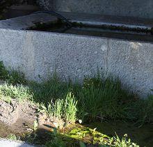 Le toilettage du Bassin de la Mure Argens