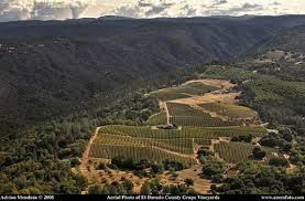 Sierra foothills Vineyards in California