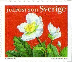 Hellebore (rose de Noël)
