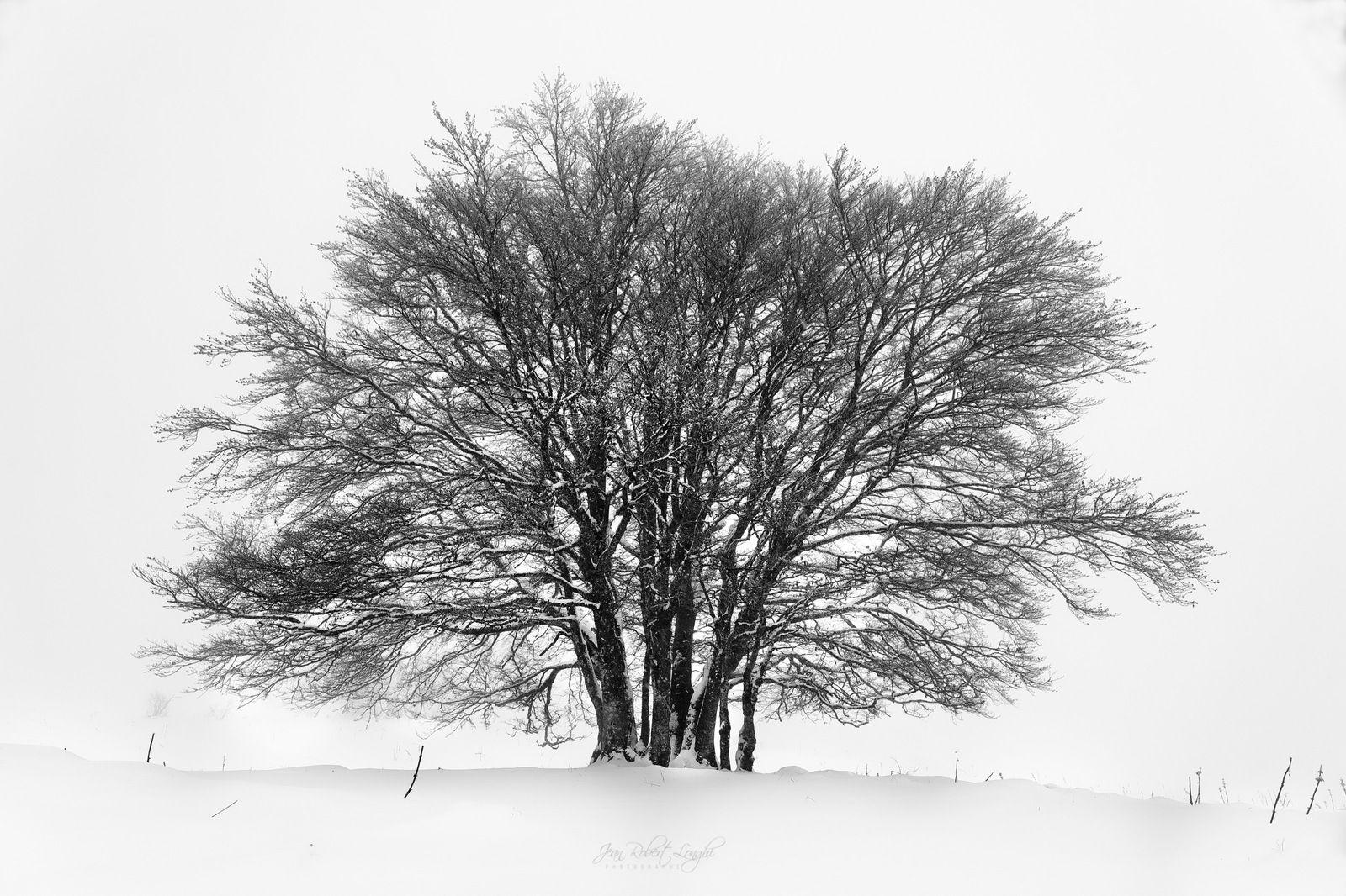Le Larmont - Hiver - 17 - ©2021 Jean-Robert Longhi Photographie non libre de droits.
