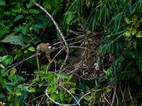 La nature d'Amazonie....Le lac Sandoval, une balade inoubliable en canoë, seul avec Capi, mon guide, une figure locale....des animaux de toute sorte à chaque coin du lac