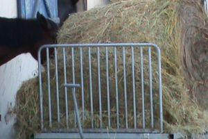 Les fibres dans l'alimentation du cheval