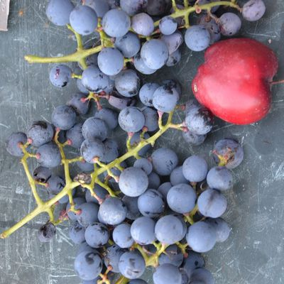 CHANGEMENT DE DATE - Comment planter et entretenir ses arbres fruitiers ? , le samedi 10 novembre 2018