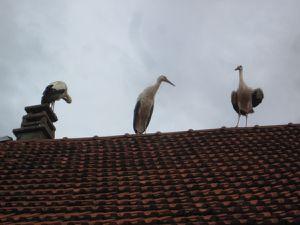 Les Cigognes au Percy: