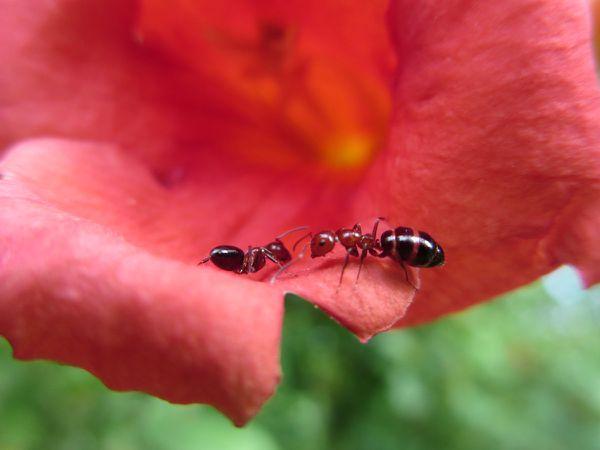 les insectes aiment les fleurs...