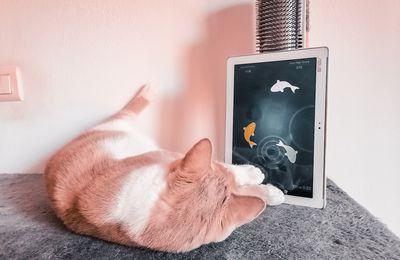 Pixel a testé l'application Friskies cat fishing