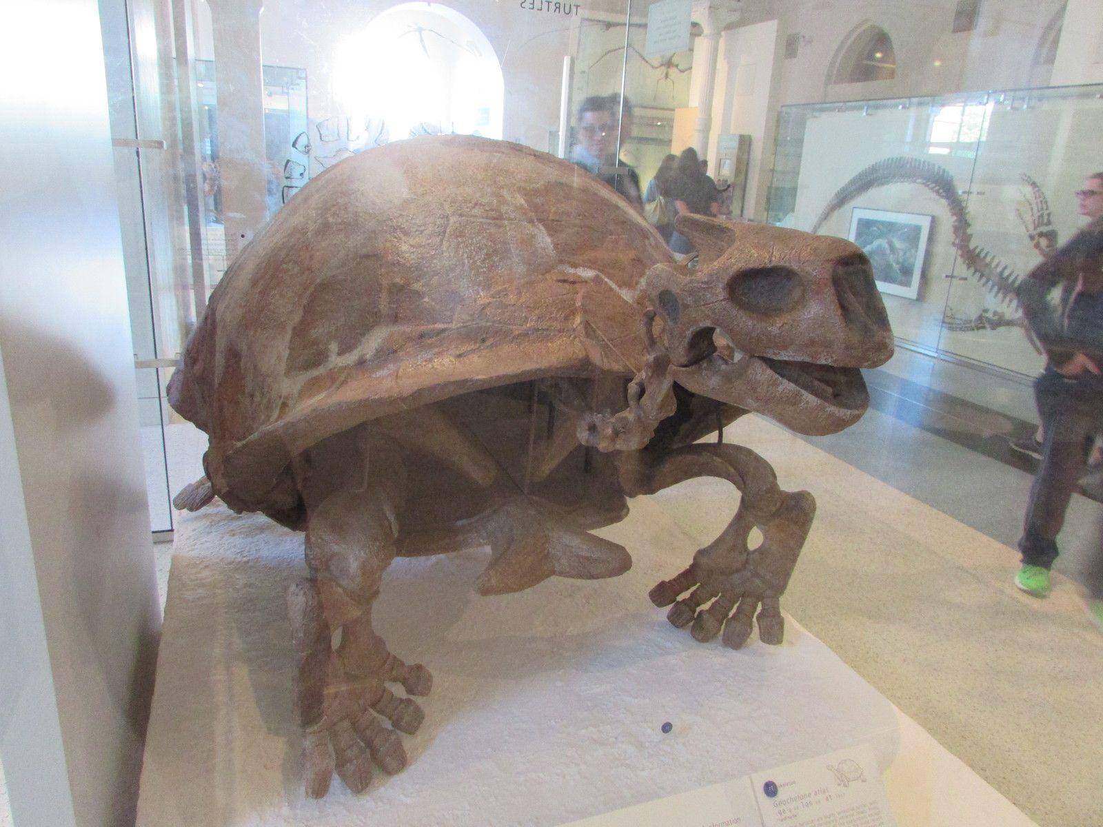 Le musée d'Histoire Naturelle de NEW YORK (3ème partie)