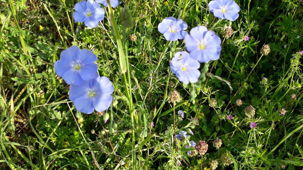 Campagne fleurie du début juin