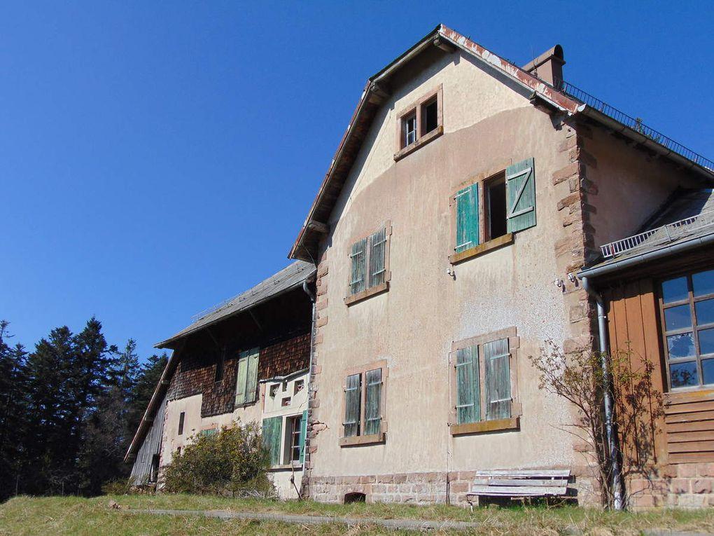 Du Grossmannstein, en à peine un quart d'heure, nous voilà à la maison forestière abandonnée du Grossmann. Une association essaye, tant bien que mal, de la sauvegarder voir de la restaurer.