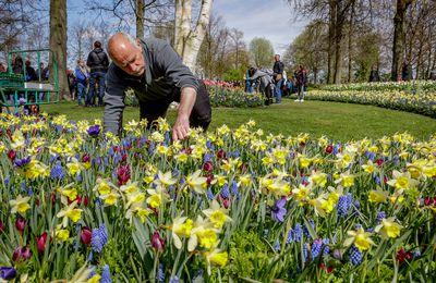 André Kuipers, astronaut planted the last flower bulbs Keukenhop 2021