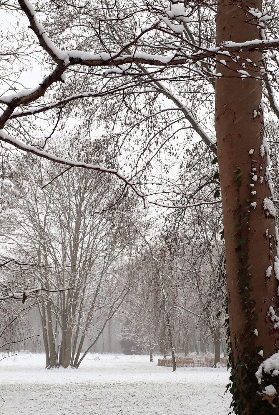 La petite promenade au parc sous la neige