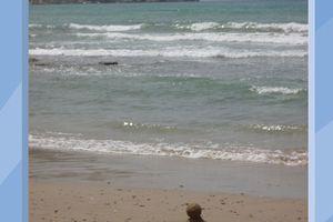 La plage en haïkus