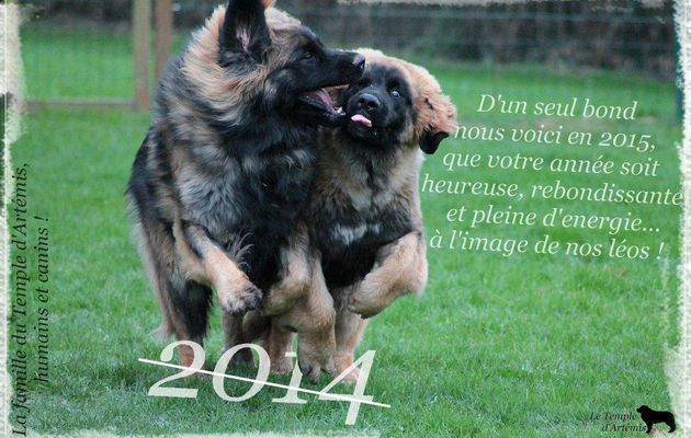 Happy Family pour une Happy New Year !