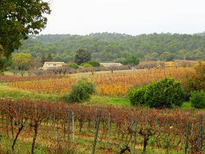 Les vignes à la fin novembre