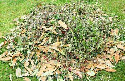 Les déchets végétaux  : interdiction de brûlage