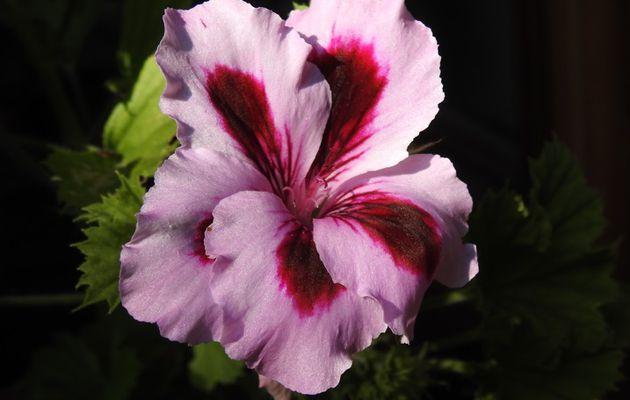 Quelques fleurs ;-)