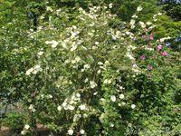 Visite de Mela-Rosa  le 17 mai 2014