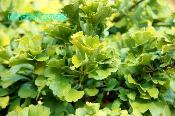 Mes coups de coeur et découvertes aux Journées des Plantes de Chantilly