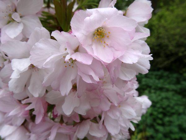 Fleurs d'avril au jardin