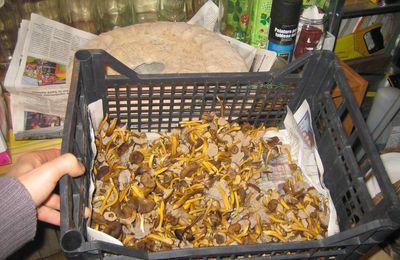 Tout ou presque sur les champignons comestibles