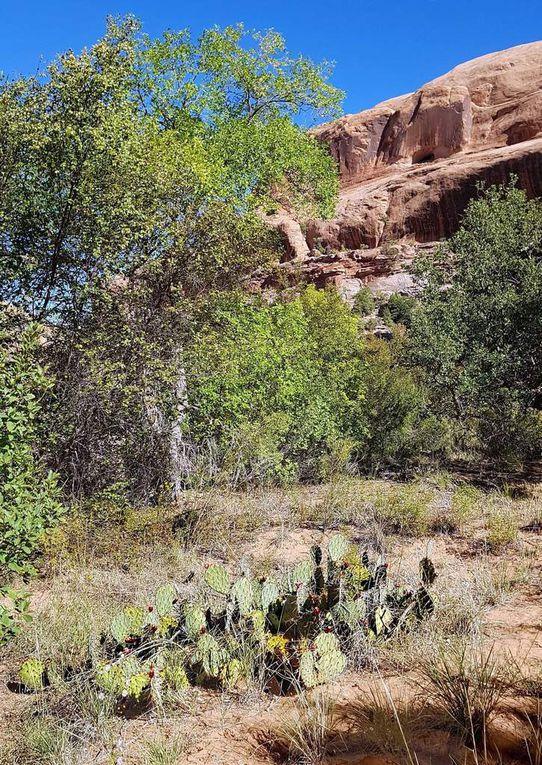 Diaporama : Plantes et fleurs du Grandstaff Canyon trail