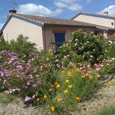 TERRITOIRES = Retrouver les BANDES FLEURIES et les HAIES pour restaurer l'eau + l'air et les pollinisateurs