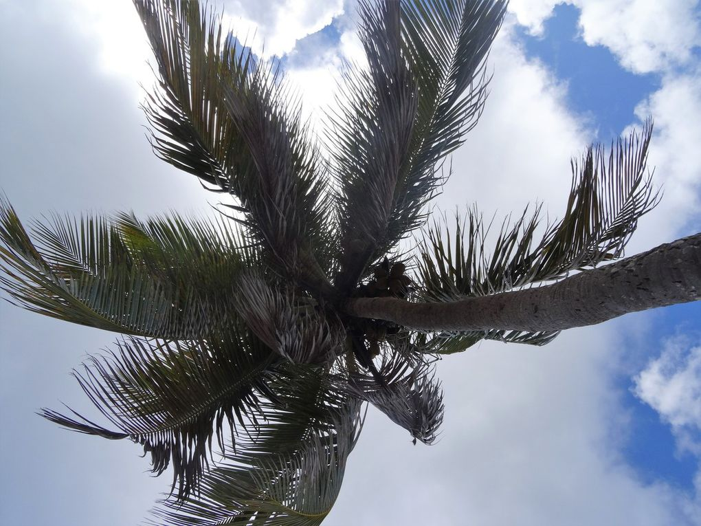 Album photos : Guadeloupe 2018