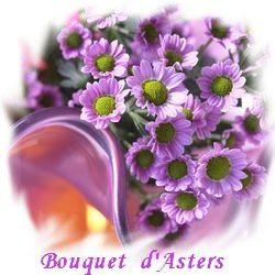L'Aster une Jolie Fleur