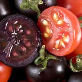 Genetically modified purple tomato 'tastier than normal varieties'