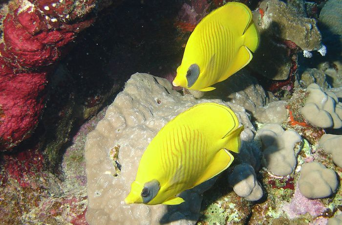 Un peu de snorkelling aux Philippines